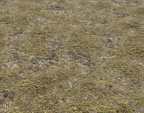 3D model Tundra terrain texture 4 PBR