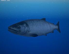3D model Chum Salmon