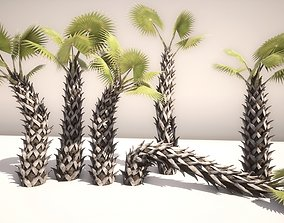 Sabal Palm - Game Ready - VR AR 3D model