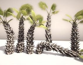 3D model SABAL PALMETTO
