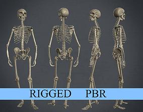 Rigged Human Skeleton 3D asset game-ready