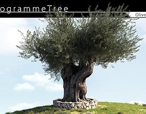 3D model Olive Tree 02