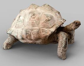 3D asset Turtle