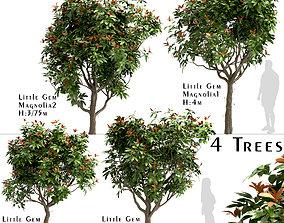 Set of Little Gem Magnolia or Southern Magnolia 3D model 3