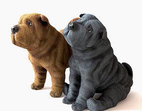 3D asset SharPei puppy
