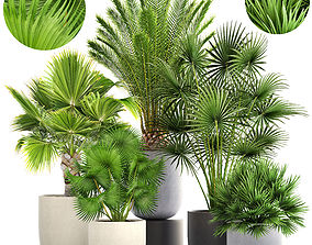 Collection palms 3D
