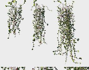 Ceropegia woodii 3D