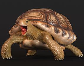 reptilia Turtle 3D model low-poly