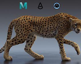 3D rigged Cheetah