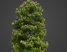 3D 2021 PBR Horse Chestnut Collection - Aesculus