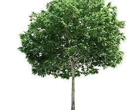 Tall Sorbus Green Leafed Tree 3D model