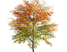 3D model Maple tree 2