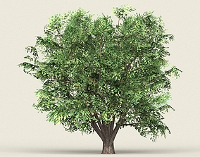 Game Ready Forest Tree 11 3D asset