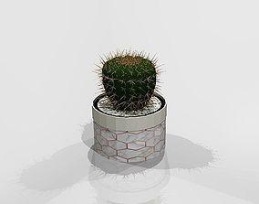 3D model green Cactus