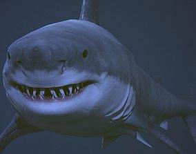 3D asset Great white shark AAA