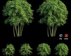 3D Bambusa ventricosa 04