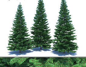 3D model Fir-tree Set 03 bark