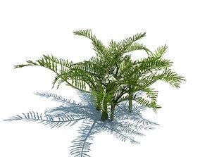 Plant Green Fern 3D