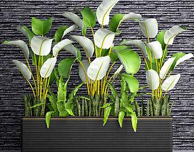 3D model Collection plants