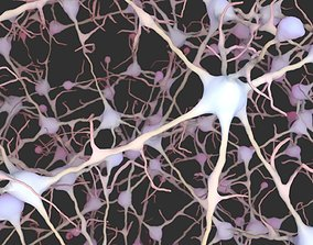 medical Neurons 3D model