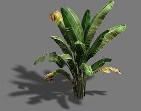 3D Trees - banana trees