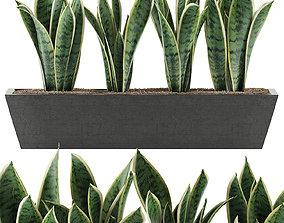 Plants Collection 47 3D