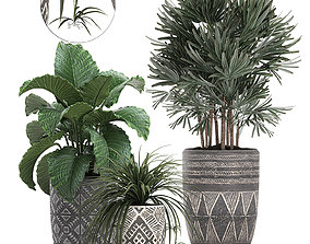 3D model Houseplants in a pot for the interior 703