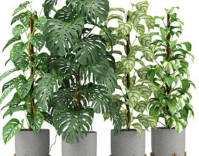 3D Plants collection 355