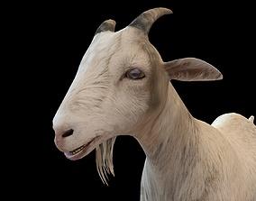 3D model White Goat Rigged