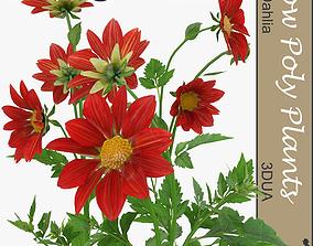 3D model Dahlia universal plant
