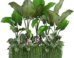 Collection Exotic plants tropical 3D