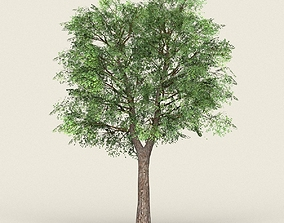 Game Ready Forest Tree 19 3D model