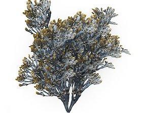 3D model Egg Wrack seaweed H1