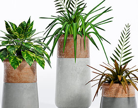 Decorative plant set-5 3D