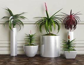 PLANTS 28 3D model