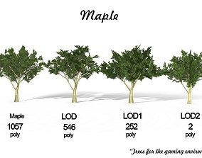 3D model Maple