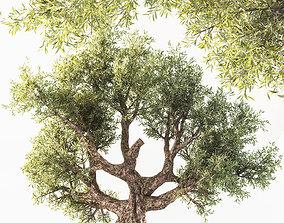 Tree 02 phytodesign 3D model