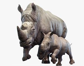 3D model Rhino Family Animated