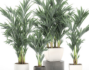 3D Decorative palm in a white flowerpot 563