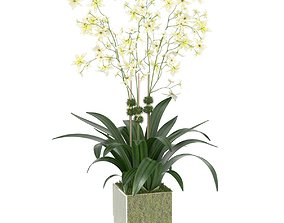 3D model DIANE JAMES Cream Oncidium Orchid Arrangement