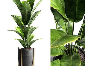 Banana tree 2 3D model