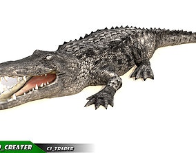 animated LowPoly Crocodile Rigged 3d model