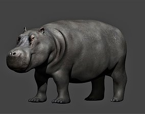 Hippopotamus fully rigged 3D asset