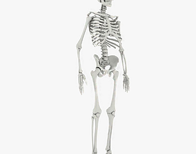 3D model low-poly Human Skeleton