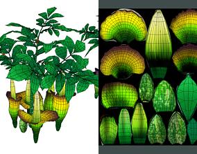 Flower Titan Arum 3D asset