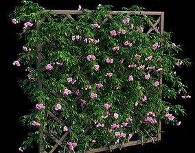 Rose plant set 32 3D