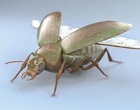 Ground Beetle 3D asset