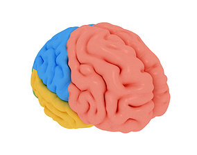 human brain Cerebrum Anatomy science 3D