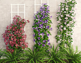 3D asset Wall flowers