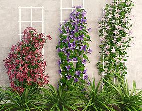3D asset Wall flowers